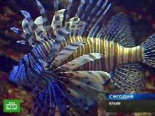 В Черном море поселятся акулы?НТВ.Ru: новости, видео, программы телеканала НТВ