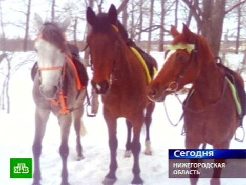 Лошадей сожгли заживо.животные, лошади, Нижегородская область, скандалы.НТВ.Ru: новости, видео, программы телеканала НТВ