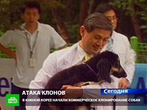 Клон собаки.НТВ.Ru: новости, видео, программы телеканала НТВ
