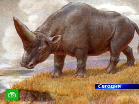 Единорог существует.НТВ.Ru: новости, видео, программы телеканала НТВ