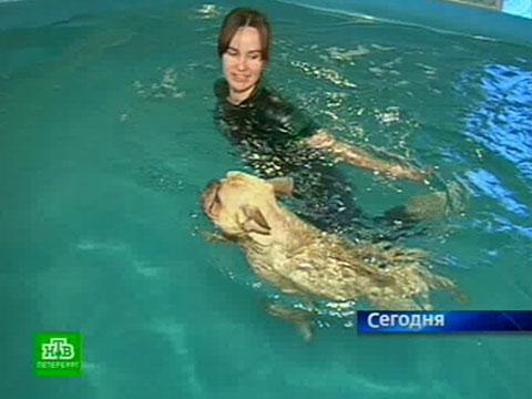 Собачья жизнь со знаком «люкс».НТВ.Ru: новости, видео, программы телеканала НТВ