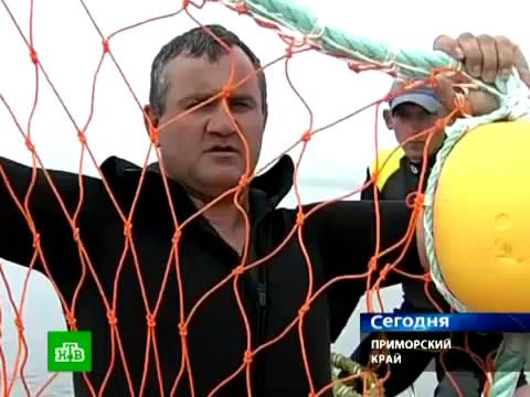 Акул пугают оранжевыми чудо-сетками.акулы, Владивосток, Приморье.НТВ.Ru: новости, видео, программы телеканала НТВ