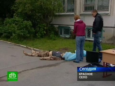 Смертельная стычка: собачника убили, обороняясь от стаффордшира.НТВ.Ru: новости, видео, программы телеканала НТВ