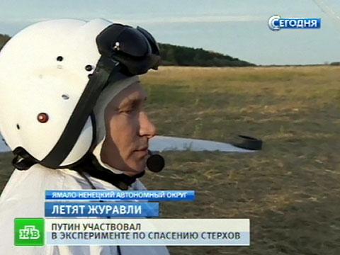 Президент Путин стал «папой имамой» для молодых стерхов.журавли, Красная книга, орнитологи, полет, птицы.НТВ.Ru: новости, видео, программы телеканала НТВ