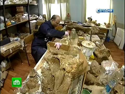 Влесах Якутии вновь будут разгуливать живые мамонты.клонирование, мамонты, наука, Якутия.НТВ.Ru: новости, видео, программы телеканала НТВ