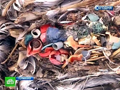 Мировой океан отравлен ядовитыми «слезами русалки».животные, море, мусор, экология.НТВ.Ru: новости, видео, программы телеканала НТВ