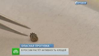Клещи открыли сезон охоты на россиян