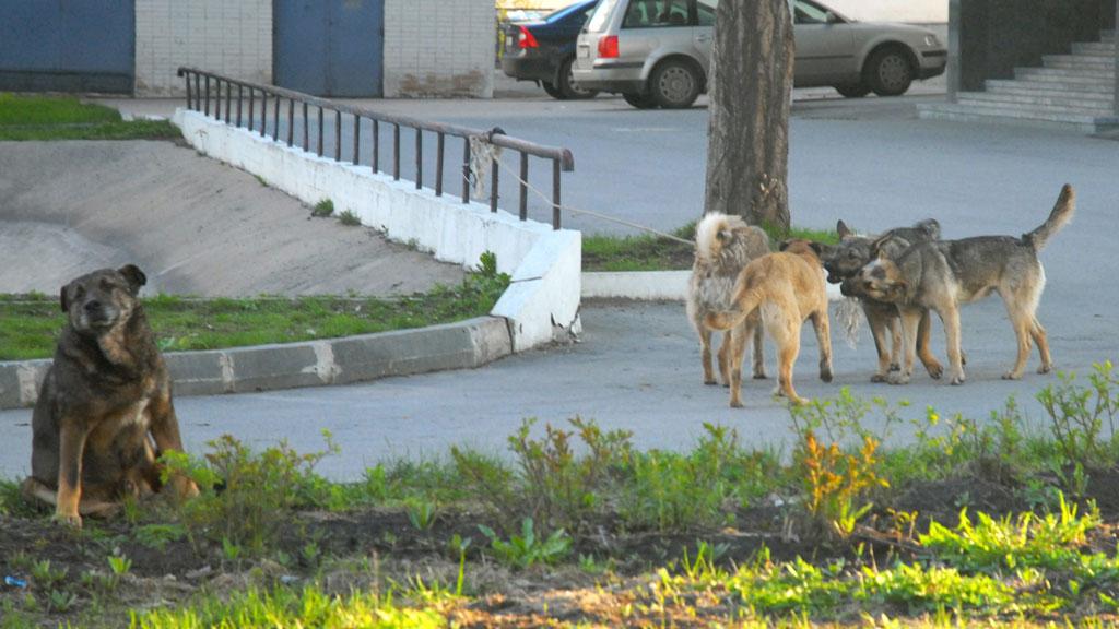Порно Собаки Улица