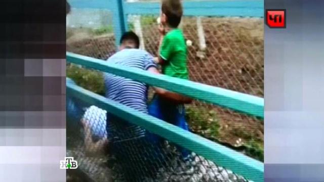 Очевидцы сняли на видео раненных взоопарке ивзволнованного жирафа.зоопарк, инцидент, Москва, пострадавшие.НТВ.Ru: новости, видео, программы телеканала НТВ