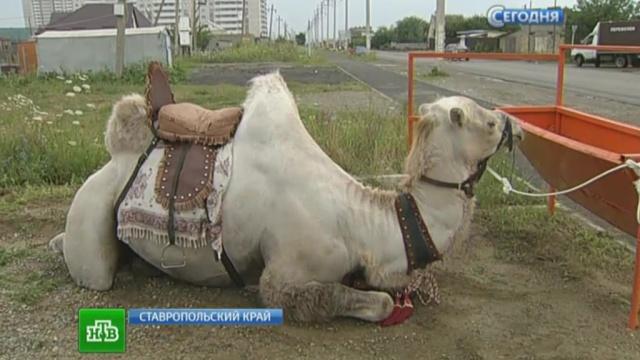 Как мы катались на верблюдах в Египте   360x640
