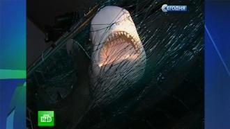 Петербуржцев приглашают узнать все о плавниках, челюстях и акулах