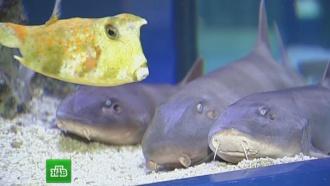 Плодятся как кошки: вКалиниграде началась распродажа акул