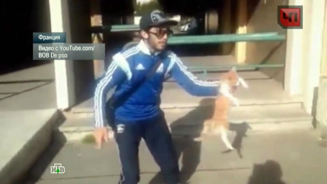 Молодой француз проведет год за решеткой за издевательство над котенком.животные, кот, наказание, приговоры, суд, Франция.НТВ.Ru: новости, видео, программы телеканала НТВ