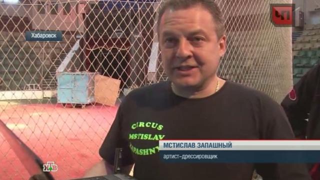 В Тольятти лжециркачи издевались над животными на глазах у публики.животные, Запашные, мошенничества, суд, Тольятти, цирк.НТВ.Ru: новости, видео, программы телеканала НТВ