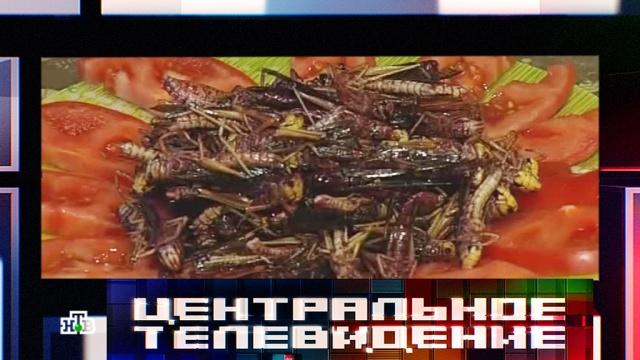 Диетические черви и сверчки вытесняют говядину и свинину из рациона мясоедов.мясо, насекомые, питание, продукты, эксклюзив.НТВ.Ru: новости, видео, программы телеканала НТВ