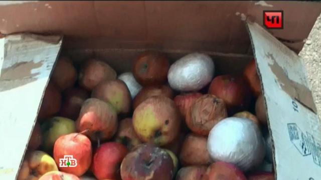 На Алтай пытались ввезти 190килограммов героина под видом яблок.задержание, наркотрафик, ФСБ.НТВ.Ru: новости, видео, программы телеканала НТВ
