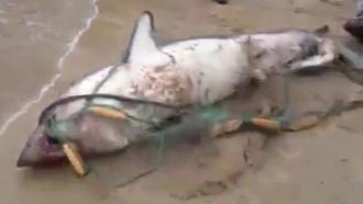 В Приморье рыбаки поймали двухметровых акул