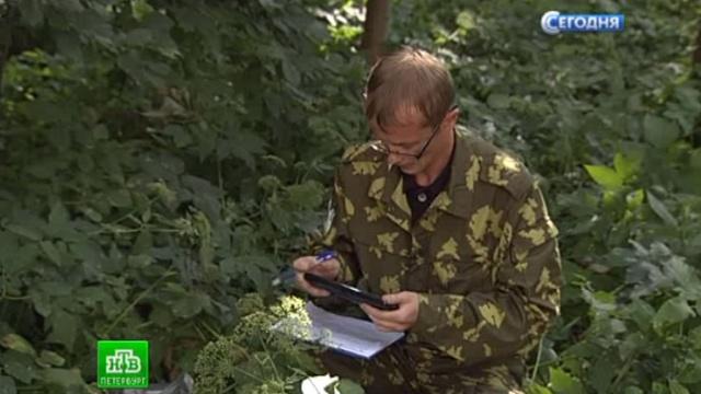 Леса Ленобласти прошли проверку на радиоактивность.Ленинградская область, радиация, экология.НТВ.Ru: новости, видео, программы телеканала НТВ