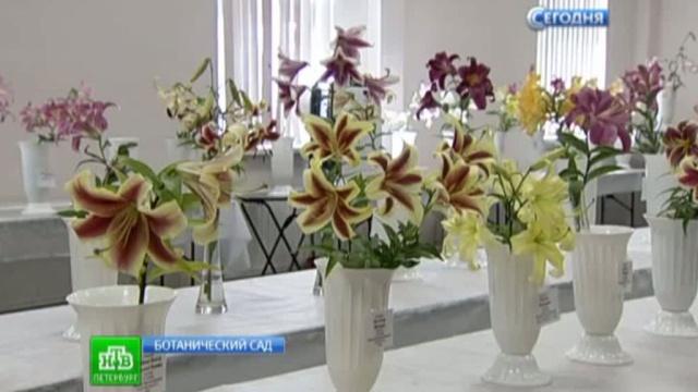 Более 150 сортов лилий представили на выставке в Петербурге.Санкт-Петербург, выставки и музеи, растения, цветы.НТВ.Ru: новости, видео, программы телеканала НТВ