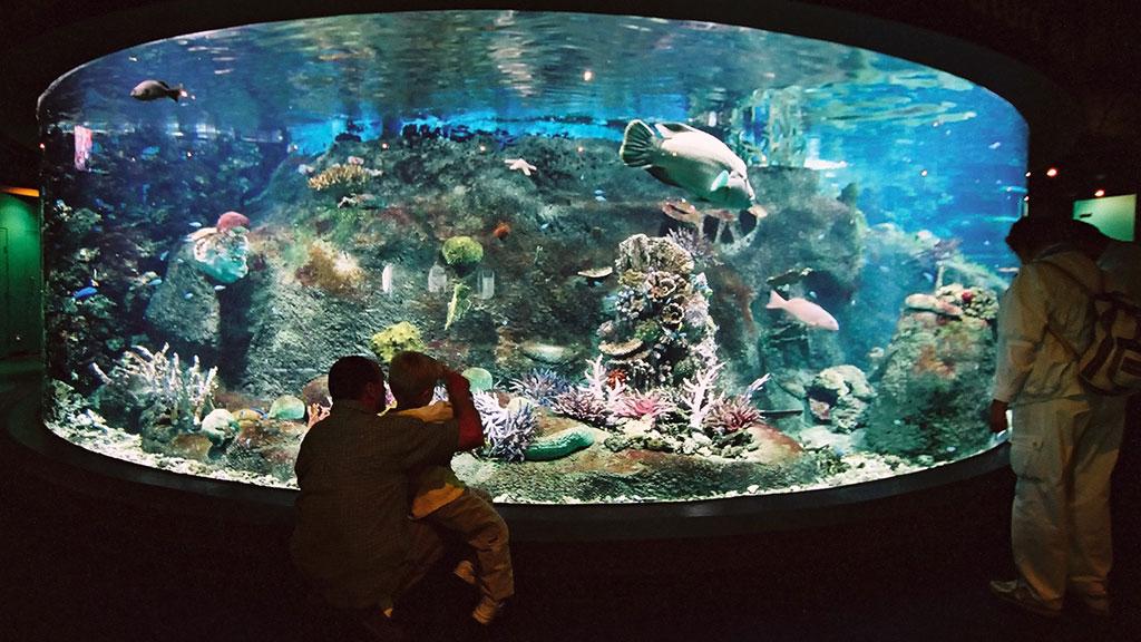 мои пожелания, аквариум на вднх картинки валяние шерсти
