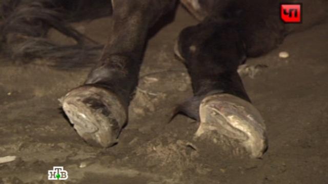 Пожилой автолюбитель задавил лошадь на юге Москвы.ДТП, Москва, животные, кони и конный спорт.НТВ.Ru: новости, видео, программы телеканала НТВ