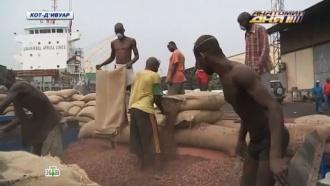 Грядет шоколадный апокалипсис: цены на <nobr>какао-бобы</nobr> взлетели до небес