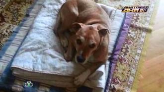 Эбола в Испании: собаку заболевшей медсестры убили вопреки протестам