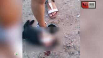 «Полный садизм»: селфи девушки — убийцы животных шокировали Рунет