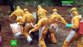 Российские ученые бьются над вакциной от лихорадки Эбола