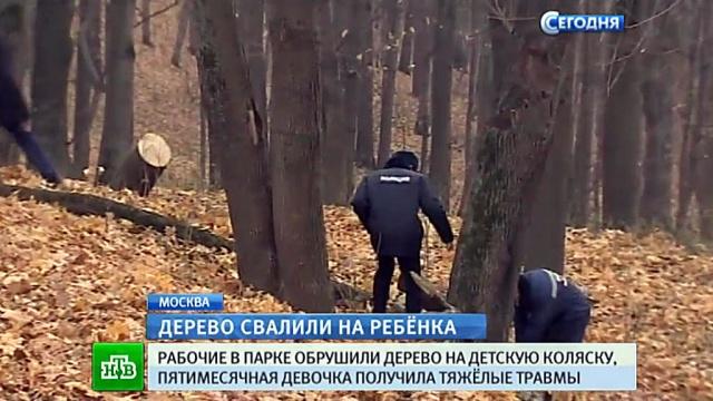 Отец едва не погибшей под спиленным деревом малышки попытался устроить самосуд над рабочими.Москва, дети и подростки, несчастные случаи, парки и скверы.НТВ.Ru: новости, видео, программы телеканала НТВ