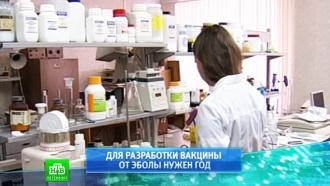 На вакцину от Эболы петербургским вирусологам нужен год