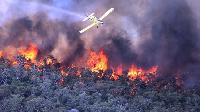 Картинки по запросу лесные пожары в сиднее