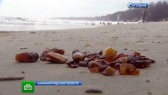 Янтарная лихорадка: толпы туристов устремились к берегам Балтики за солнечными камнями