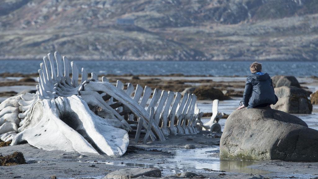 Картинки по запросу скелет кита териберка