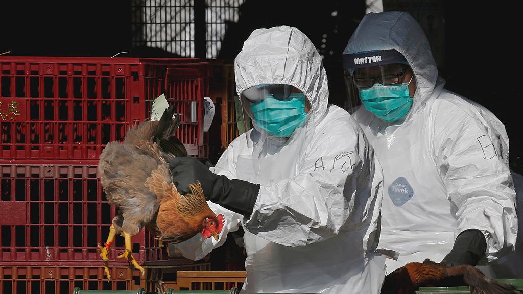 для птичьего гриппа картинки для процедуры оздоравливают