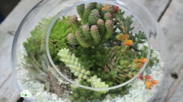 Новые технологии помогут вырастить джунгли в обычной квартире.растения, технологии, цветы.НТВ.Ru: новости, видео, программы телеканала НТВ