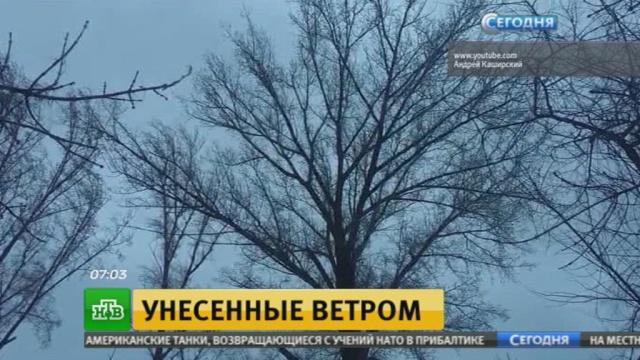 Свирепый ветер и прогнозируемый снег готовят московским коммунальщикам напряженную ночь.Москва, Московская область, погода, снег, штормы и ураганы.НТВ.Ru: новости, видео, программы телеканала НТВ