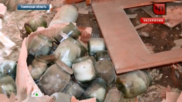 Студент нашел в Тобольске заброшенную лабораторию с мертвыми младенцами.медицина, младенцы, Тюменская область, эксклюзив.НТВ.Ru: новости, видео, программы телеканала НТВ