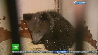 Найденную вНовой Москве медведицу назвали вчесть Дня Победы
