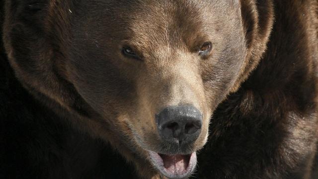 Сыщики заинтересовались убийством медведя внациональном парке вИркутской области.Иркутская область, браконьерство, животные, медведи.НТВ.Ru: новости, видео, программы телеканала НТВ