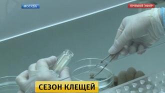 Специалисты назвали самые действенные способы борьбы склещами