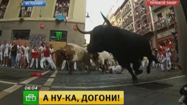 В испанской Памплоне забег быков превратился в кровавую драму.Испания, животные, несчастные случаи, фестивали и конкурсы.НТВ.Ru: новости, видео, программы телеканала НТВ