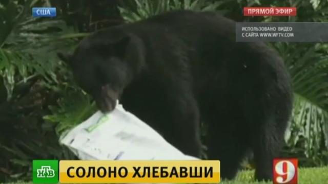 Дикий медведь уснул во дворе жилого дома, объевшись собачьего корма.медведи, США, курьезы, животные.НТВ.Ru: новости, видео, программы телеканала НТВ