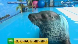 Жители Дальнего Востока через соцсети спасли слепого израненного тюлененка