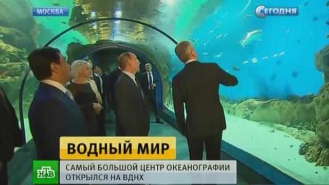 Первым посетителям крупнейшего вЕвропе океанариума на ВДНХ показали китов иакул.ВДНХ, Москва, Путин, дети и подростки.НТВ.Ru: новости, видео, программы телеканала НТВ