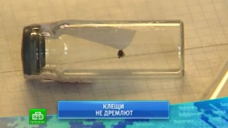 В Ленинградской области активизировались клещи
