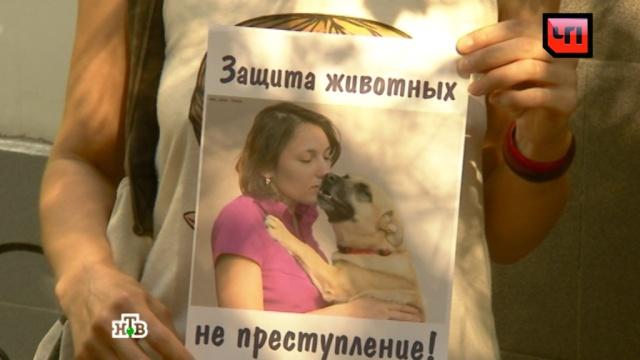 Похитительницу собаки-поводыря хотят отправить под домашний арест.Москва, животные, собаки.НТВ.Ru: новости, видео, программы телеканала НТВ