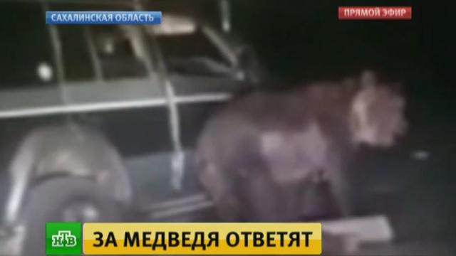 «Отдайте их медведю»: Рунет возмущен садистским «сафари» на Курилах.жестокость, животные, задержание, медведи, полиция, Сахалин.НТВ.Ru: новости, видео, программы телеканала НТВ