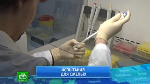 Питерский НИИ гриппа протестирует вакцину от Эболы на добровольцах.Санкт-Петербург, Эбола, медицина, наука и открытия, эпидемия.НТВ.Ru: новости, видео, программы телеканала НТВ