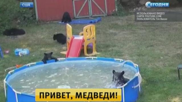 ВНью-Джерси медведи устроили вечеринку убассейна.животные, курьезы, медведи, США.НТВ.Ru: новости, видео, программы телеканала НТВ